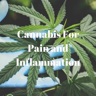 Cannabis For Pain and Inflammation: Confessions of a CBD Nurse Educator