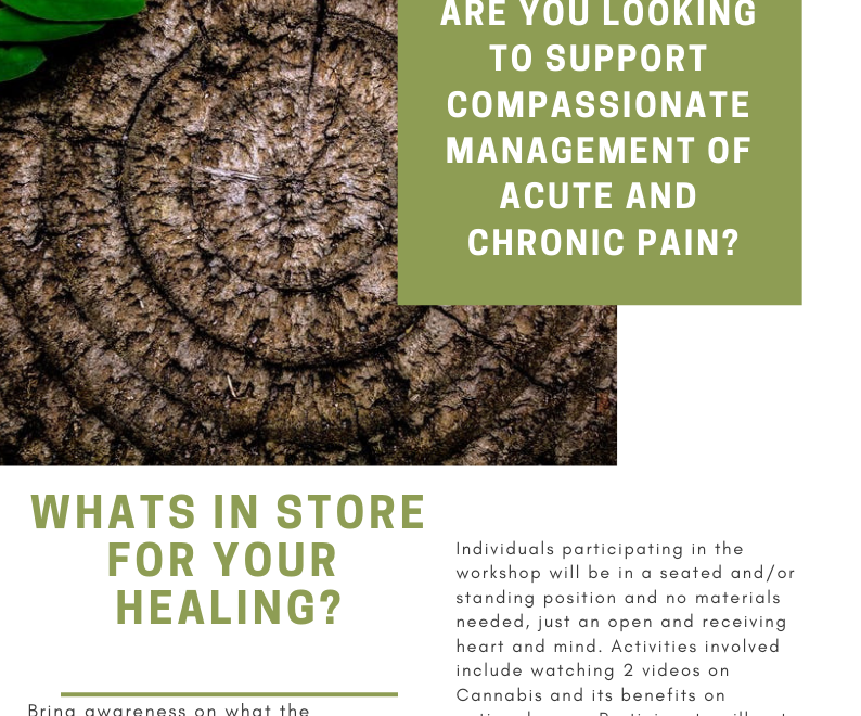 The Cannabis Plant as Medicine for Pain Support and Balance