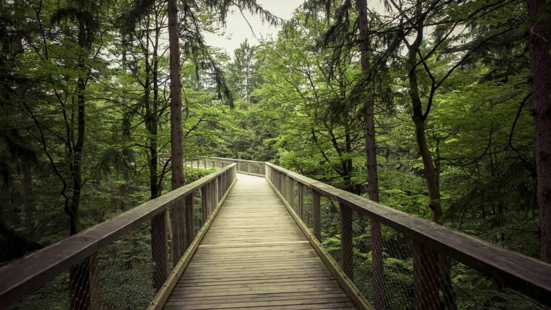 Herbal & Healing Entrepreneur Journey
